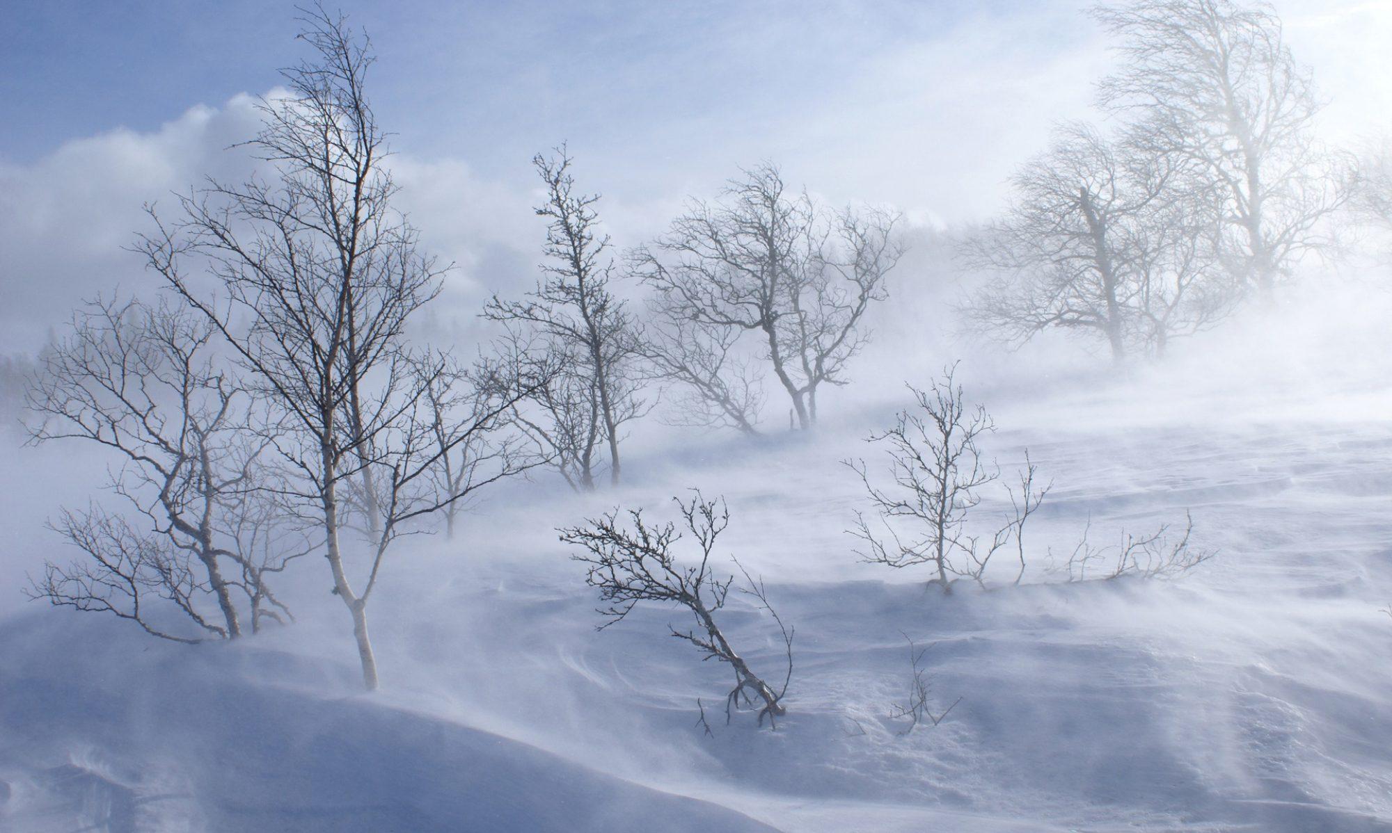 Blizzard Hosting by Snowdrift